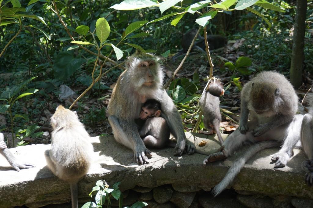 Ubud Kutsal Maymun Ormanı